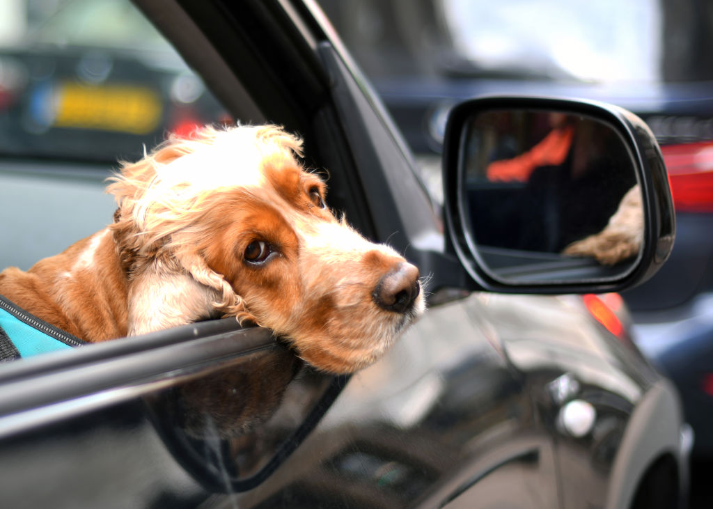 The Top 5 Car Harnesses For Your Dog In 2019