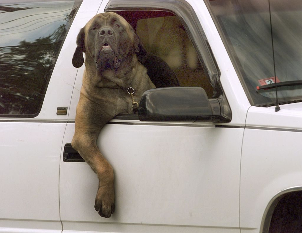 Big dogs need bigger pickup trucks | Getty