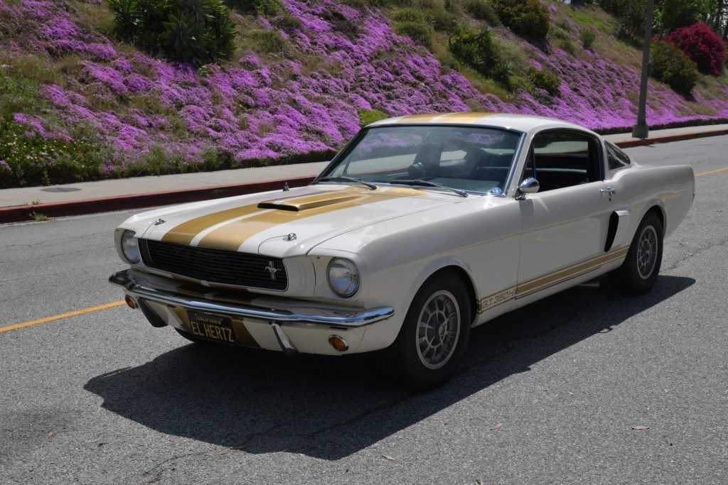 White-with-gold-stripes 1966 Ford Shelby GT350H Mustang parked on hill road next to flowers