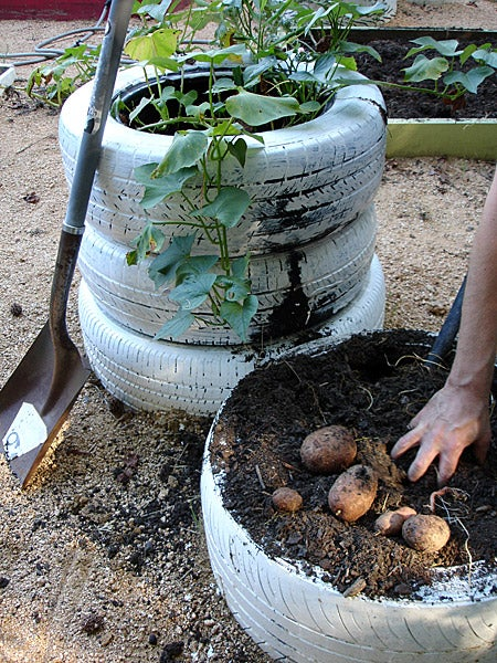 used tires stacked for growing potatoes for your quarantine gardening project
