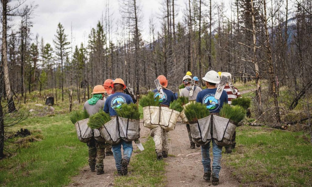a group of volunteers carry trees to plant in an area devoted by wildfires