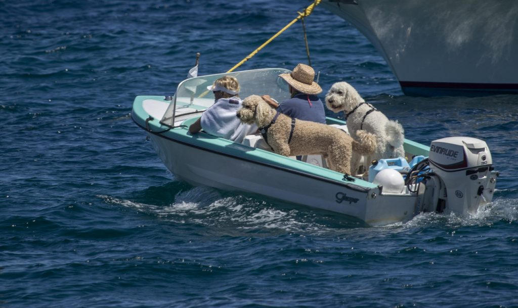Boat owners going for a ride with their pet dogs