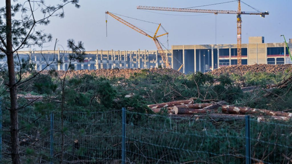 Felled trees lie on the construction site of the Tesla Gigafactory. Environmentalists have obtained a court order stopping the premature start of a further clearing of forest land | Patrick Pleul/picture alliance via Getty Images