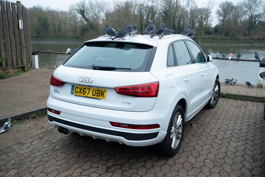 Pigeons on the roof of a white Audi SUV