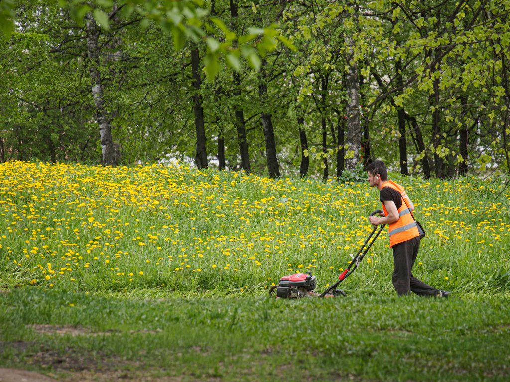 A man using a push lawn mower to mow grass