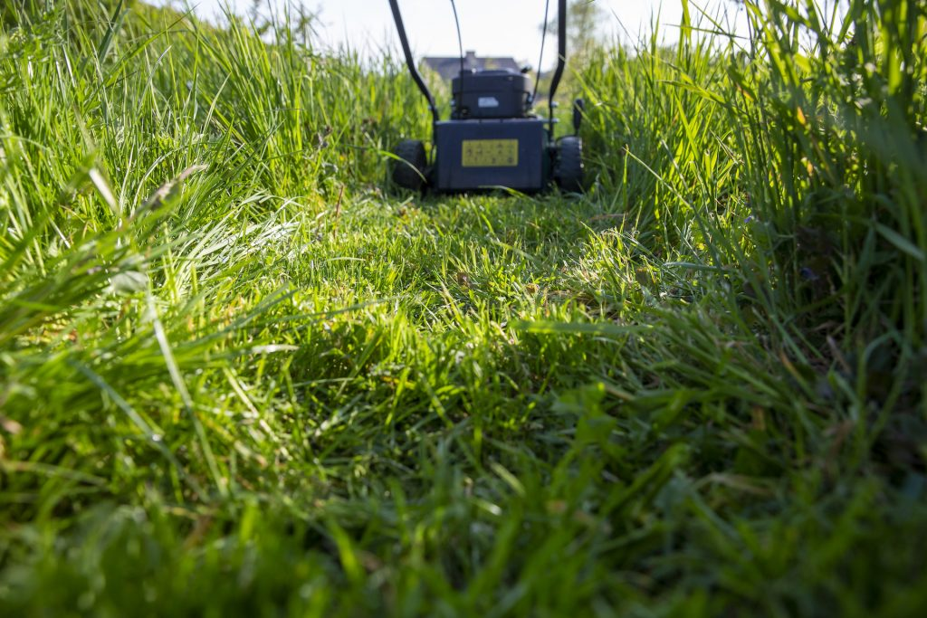 lawn mower in the tall grass