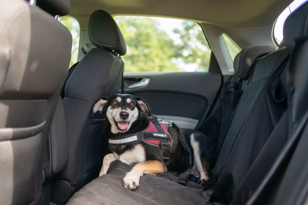 A dog lies on a car's back seat. Heated and cooled seats can make riding in a car more comfortable.