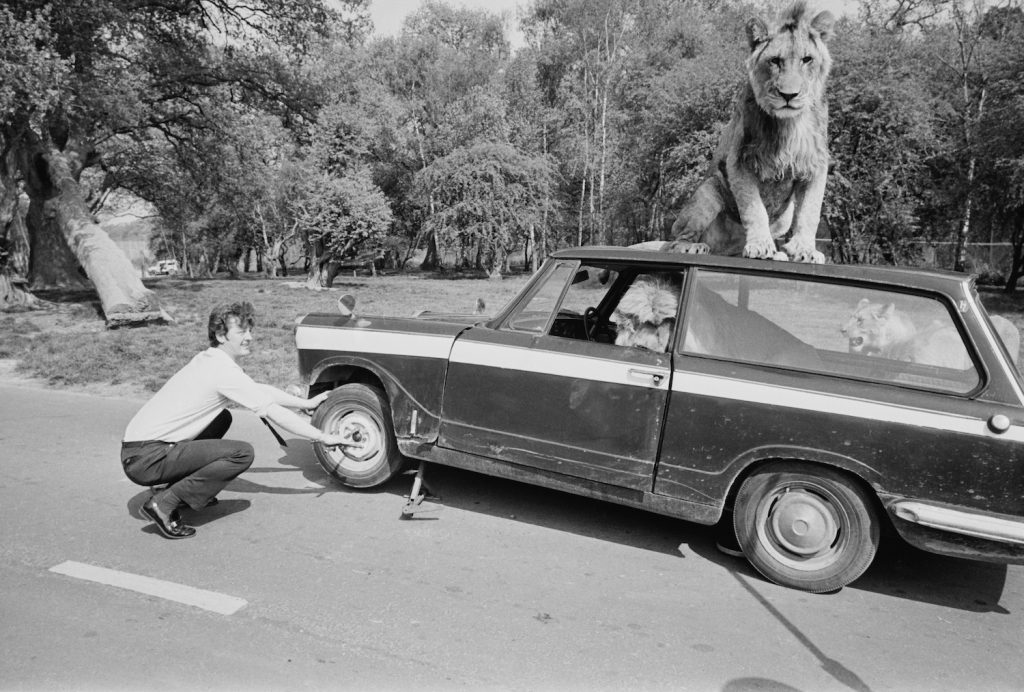 Roger Frampton mends a punctured tire on his car inside the lion enclosure at Windsor Safari Park, Berkshire, 1972. (Photo by Harry Dempster/Daily Express/Hulton Archive/Getty Images) | Use our tire load index chart explained to find your max tire weight