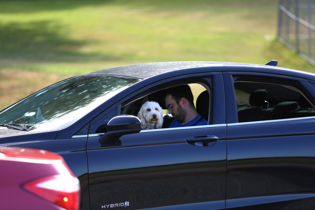 A white dog sits on a man's lap in the front seat of a car in traffic