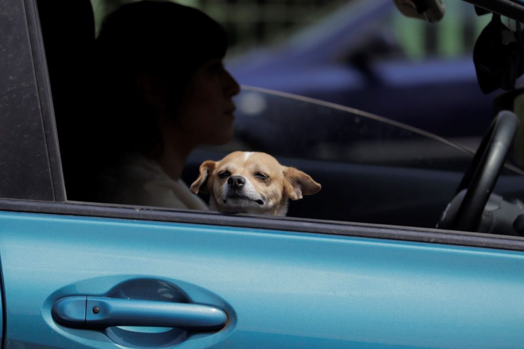 A dog staring out the window in a car from the passenger seat