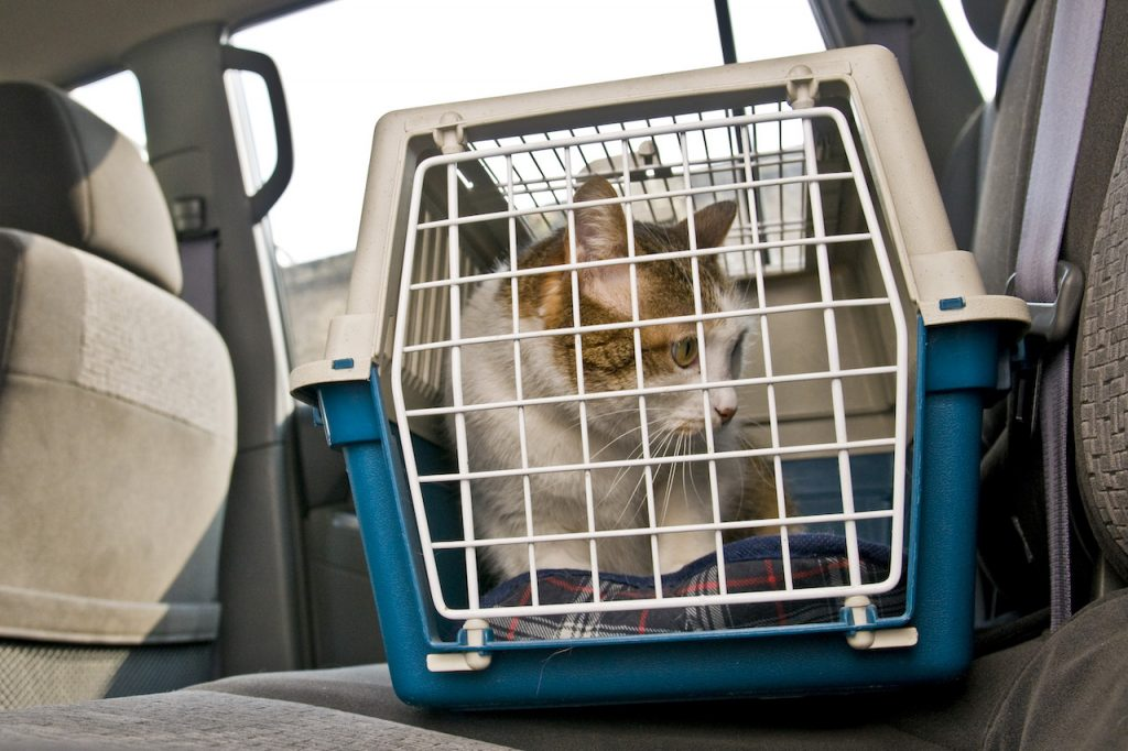 Cat going for a car ride in a travel carrier