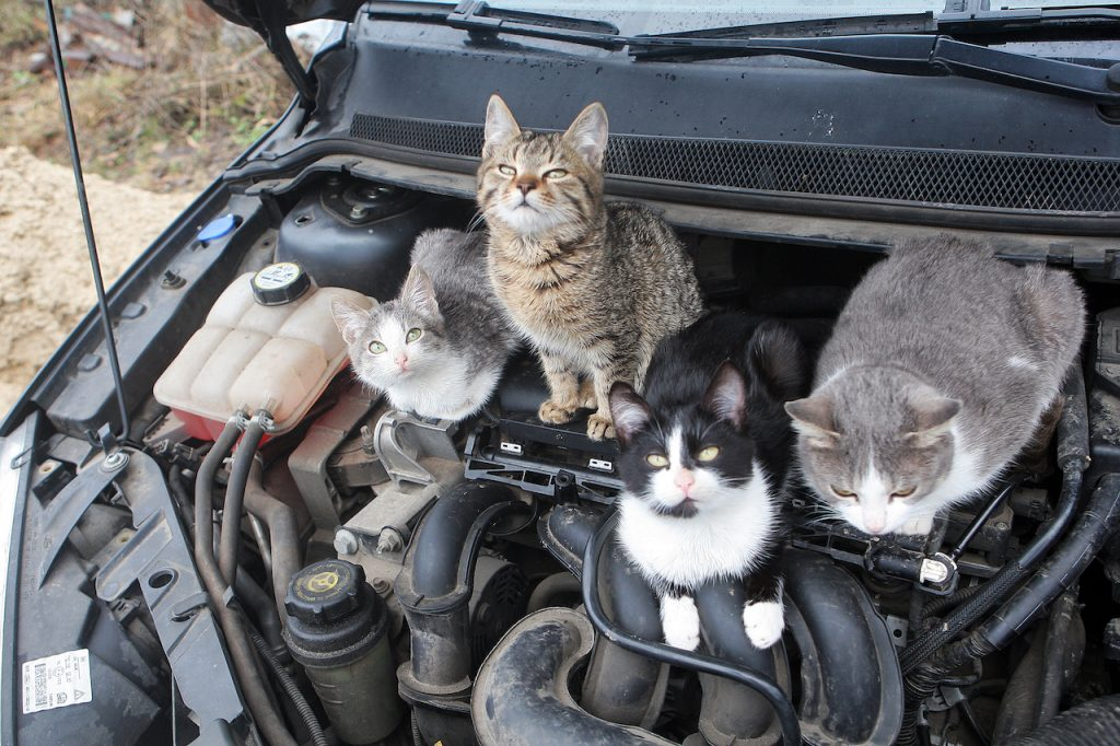 Four cats sitting on a car engine